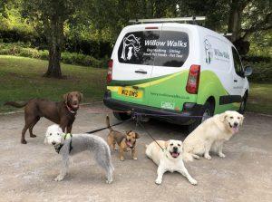 Willow-Walks-Dog-Walking-Van